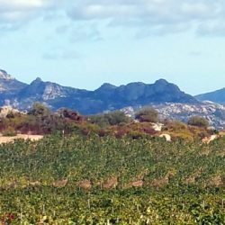 vigne-surrau-granite2